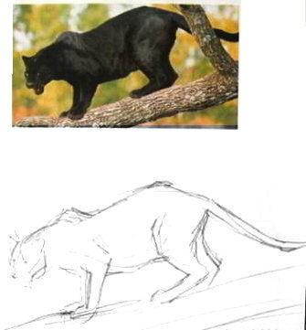 Как нарисовать пантеру