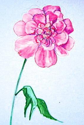 Пион рисунок