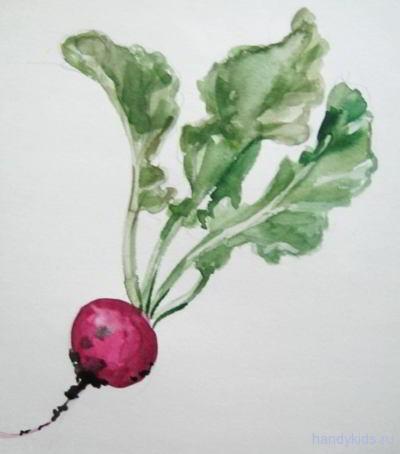 Рисунок редис