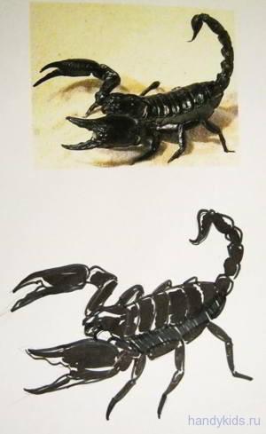 Рисунок скорпион