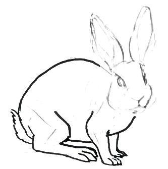 Рисуем кролика реалистически