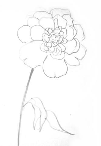 Пион -рисунок карандашом