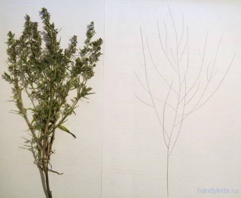 """Рисуем  """"дерево"""" с натуры"""