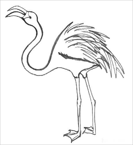 Раскраска Фламинго