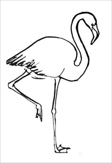 Раскраска Фламинго -3