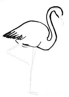 Поэтапный рисунок фламинго