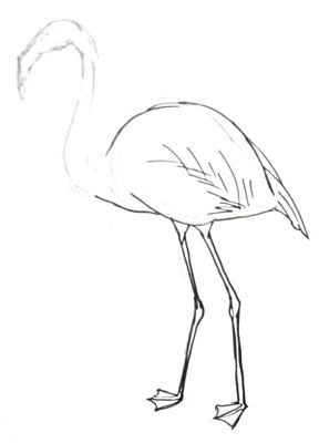 Нарисуем фламинго