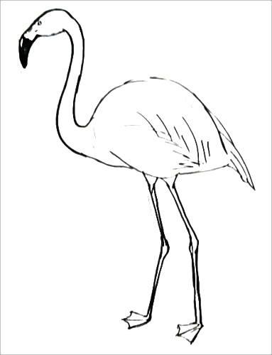 Раскраска Фламинго -1