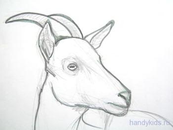 Как нарисовать морду козы