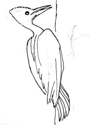 Урок рисования королевского дятла