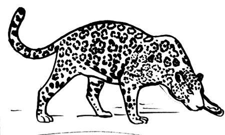 Ягуар -раскраска -7