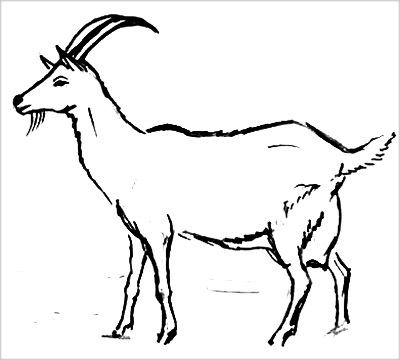 Коза раскраска