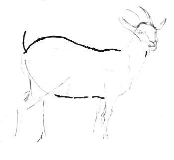нарисуем козу поэтапно