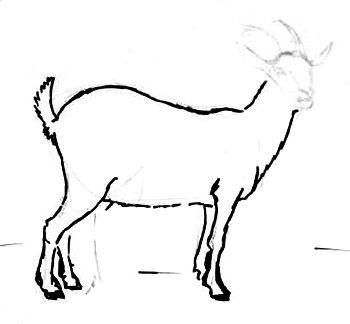 Урок рисования козы