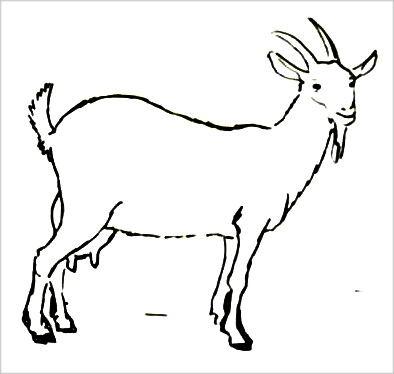 Раскраска коза -2
