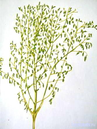 Рисунок куст(дерево.