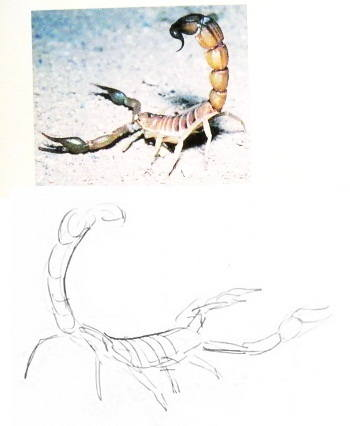 Как нарисовать скорпиона 13
