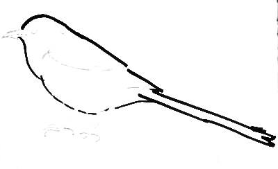 Рисуем птицу сороку