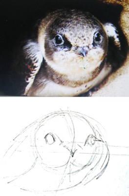 Как нарисовать голову стрижа