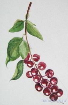 Рисуем  ягоды черёмухи