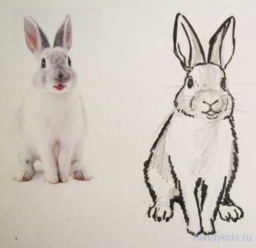 Кролик -рисунок по фотографии