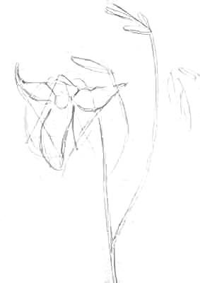 Нарисуем цветок лилии