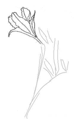 Урок рисования лилии