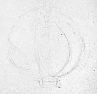 Капуста -набросок карандашом