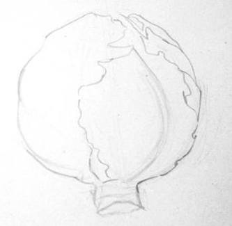 Поэтапный рисунок капусты