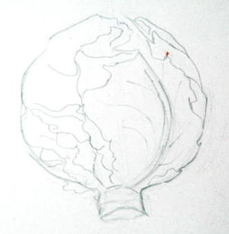 Рисунок капусты