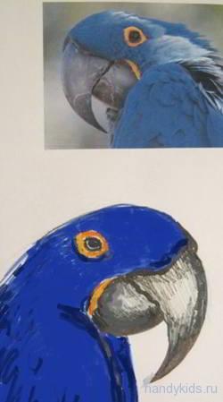 Рисунок - голов попугая