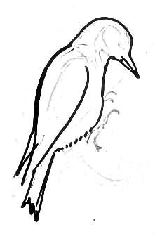 Урок рисования дятла -3