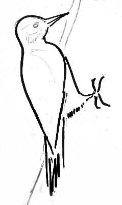 Рисуем дятла -3