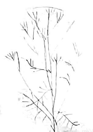 Стебель цветка -набросок