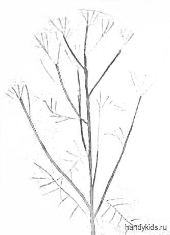 Рисуем ветвистое растение