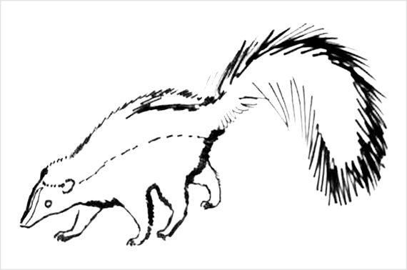 Рисунок-раскраска Скунс