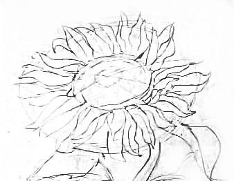 Цветок подсолнуха -рисунок карандашом