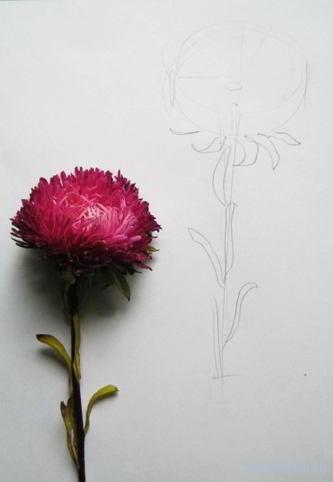 Рисуем астру