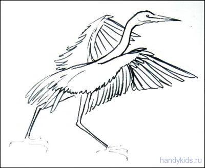 birds 2 008