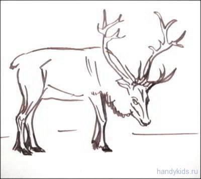 Раскраска северный олень