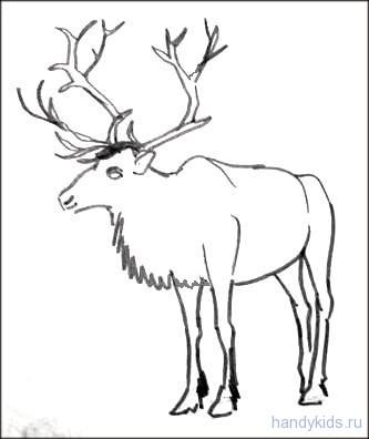 Раскраски о животных севера