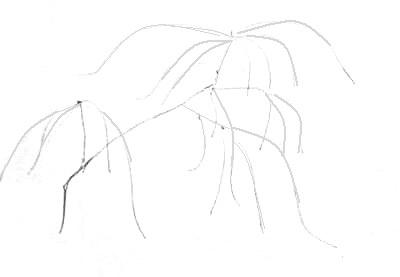 Рисуем ветку яблони