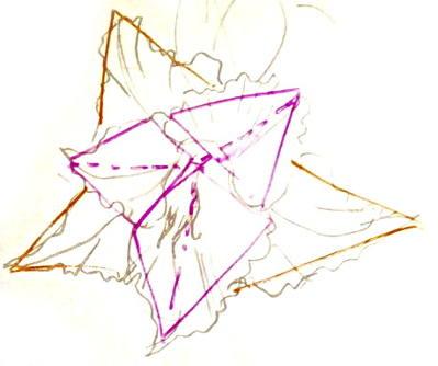 схема строения цветка гладиолуса.