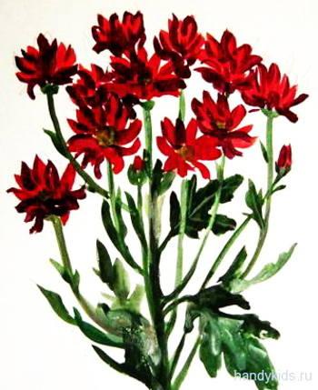 Рисунок хризантемы.