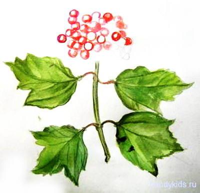 Рисуем ягоды калины поэтапно