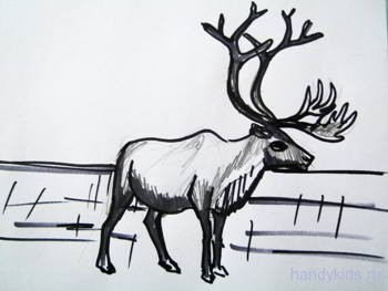 Северный олень рисунок