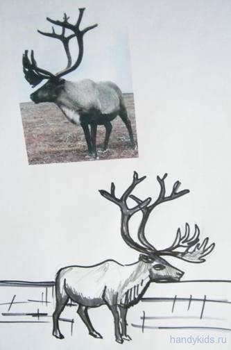 Рисуем северного оленя