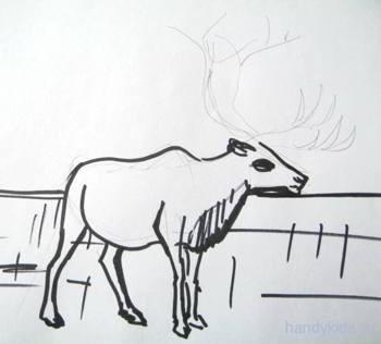 Как рисовать северного оленя