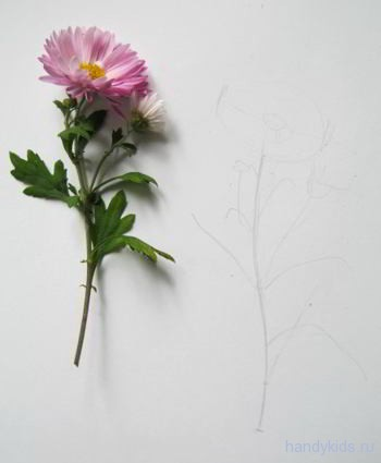 Как рисовать хризантему