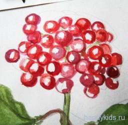 Как нарисовать ягоды калины